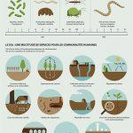 Infographie : Les sols au service d'une société durable
