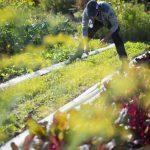 Nourrir la planète grâce à l'économie circulaire