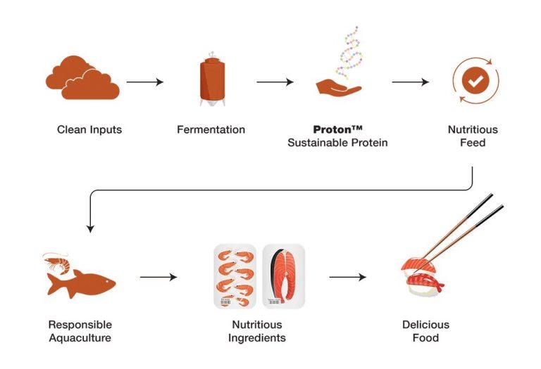 Deep Branch Biotechnology : de la nourriture à base de CO2 pour les animaux