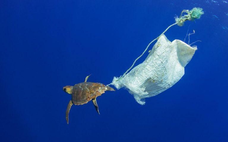 Journée mondiale de l'océan : l'appel des scientifiques à mieux gérer les trésors des fonds marins