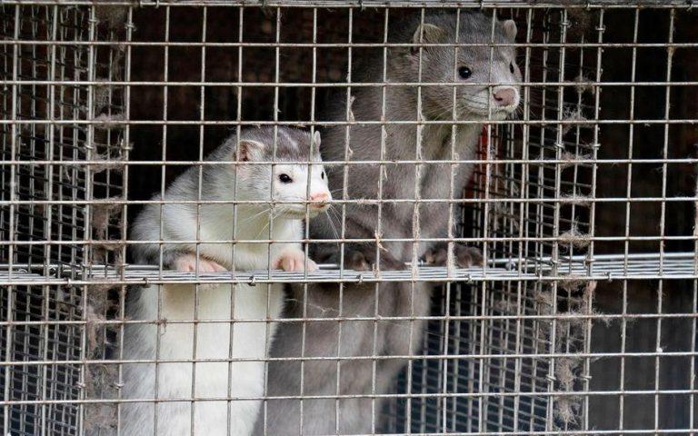 Israël premier pays à interdire le commerce de toute fourrure animale pour la mode