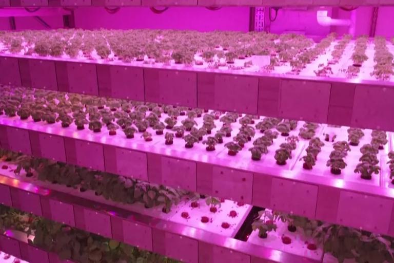 À Château-Thierry dans l'Aisne, l'ambition d'une ferme verticale : faire pousser 8 millions de plantes sans terre