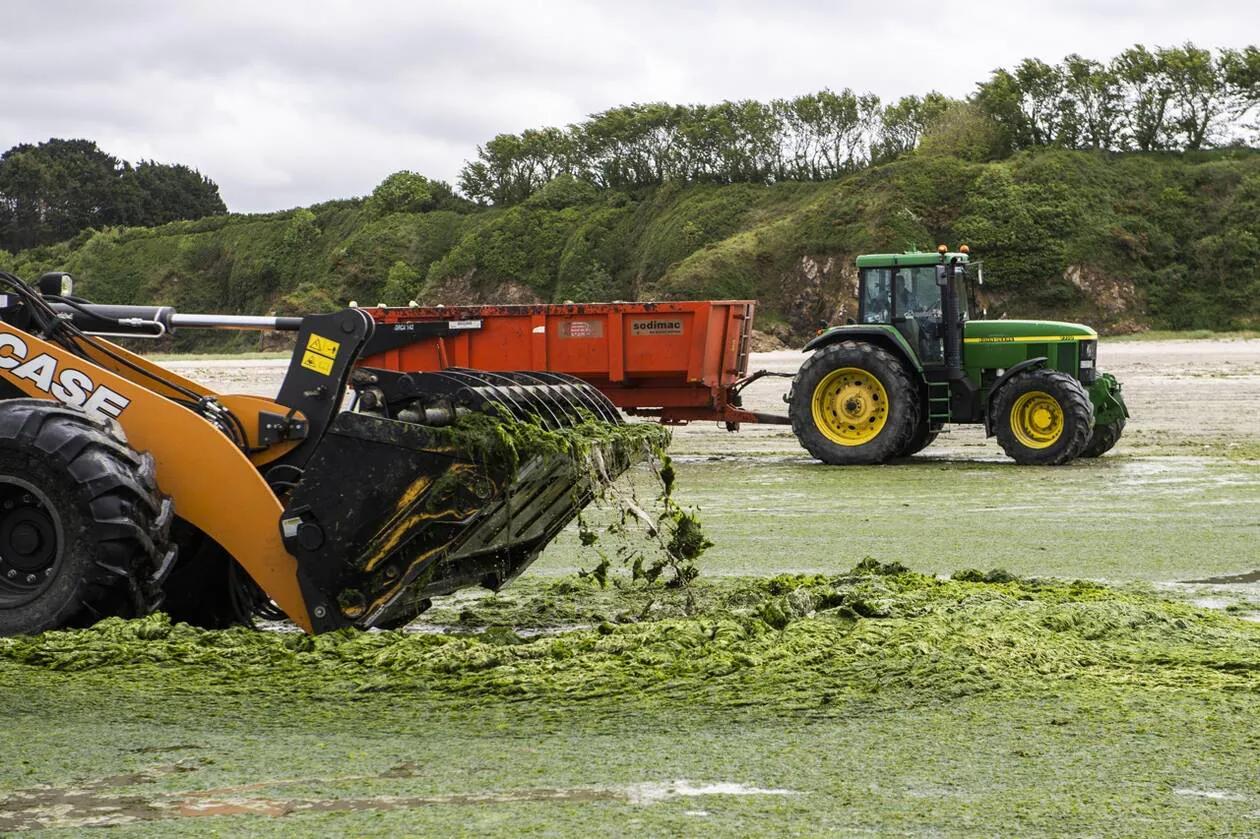 Algues vertes en Bretagne. Les agriculteurs au bord du « découragement »