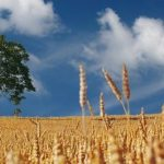 L'agriculture de conservation pourrait mieux résister à l'évolution du climat