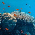 Il est encore temps de sauver les récifs coralliens, mais il faut agir maintenant
