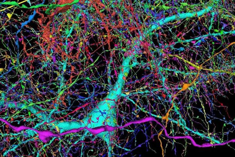 Google a cartographié un échantillon de cerveau humain comme jamais auparavant