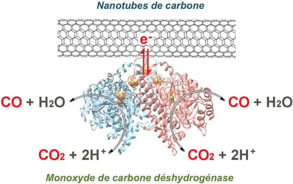 Un nouveau procédé enzymatique pour la réduction du CO2