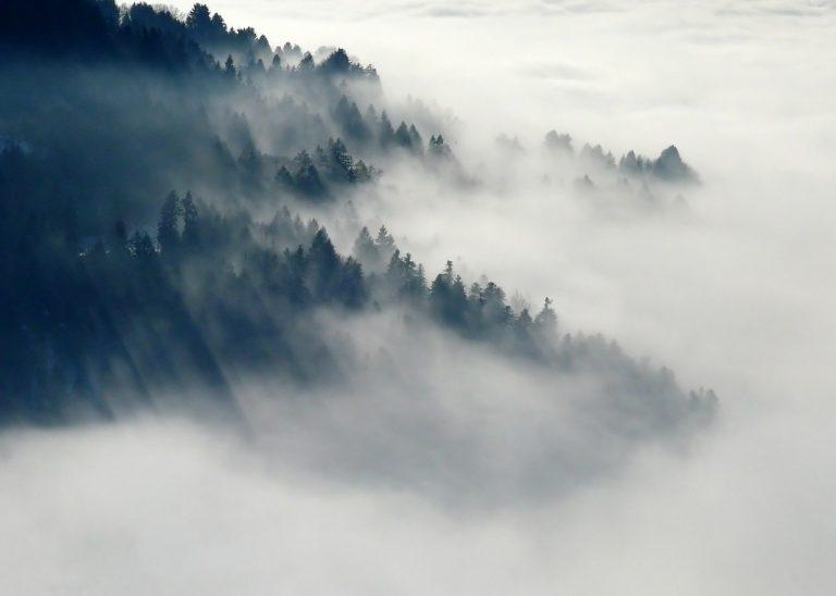 L'accroissement des forêts pourrait tempérer le climat en favorisant les nuages bas
