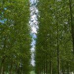 L'épigénétique, un nouveau levier pour améliorer la tolérance à la sécheresse des arbres