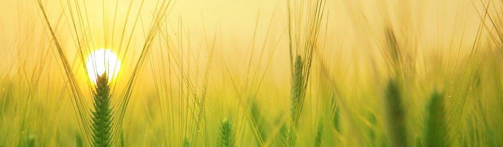 Les promesses du recours aux satellites en agriculture