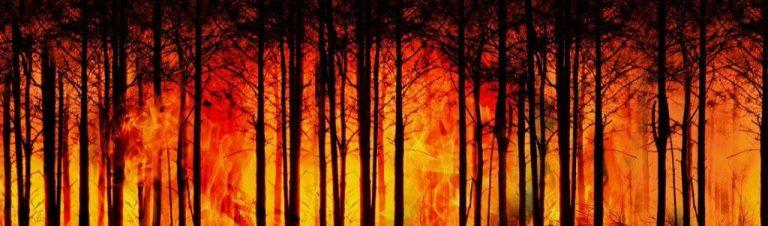 Incendies de forêt : des capteurs sans fil pour sonner l'alarme au plus vite