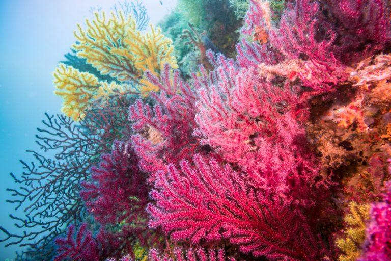 Lancement du premier projet de conservation marine participative en Méditerranée